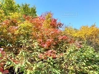 森の中の木の写真・画像素材[4899076]