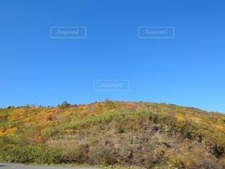 背景に山のある木の写真・画像素材[4899078]