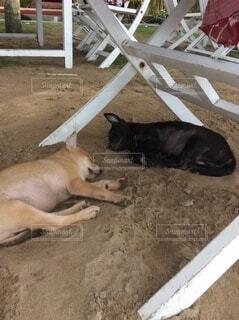 犬,動物,屋外,砂浜,黒,茶色,2匹,景色,寝転ぶ,寝る,子犬,のんびり