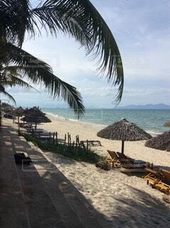 空,屋外,南国,ビーチ,雲,砂浜,樹木,ヤシの木,ベトナム,ホイアン