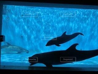 動物,魚,イルカ,水族館,水面,葉,泳ぐ,テレビ,画面,モニター,サメ,シャチ,アシカ,海獣,クジラ,フィン,バンドウイルカ,ホオジロザメ,海洋生物学,ハンドウイルカ,クジラ目