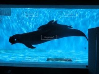 動物,魚,イルカ,水族館,泳ぐ,テレビ,画面,モニター,サメ,シャチ,海獣,クジラ,フィン,バンドウイルカ,フラット,ハンドウイルカ,クジラ目
