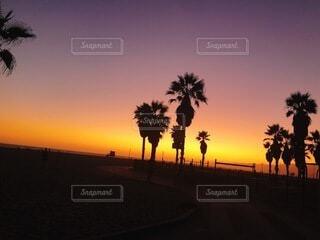 自然,風景,海,空,屋外,太陽,ビーチ,夕暮れ,アメリカ,樹木,ヤシの木,日の出,sunset,明るい,カリフォルニア,草木,パーム