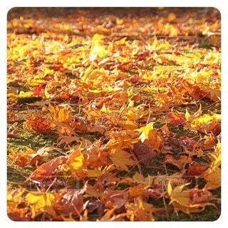 落ち葉の絨毯の写真・画像素材[4906611]