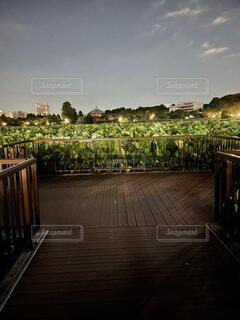 風景,空,屋外,都会,木目,草木