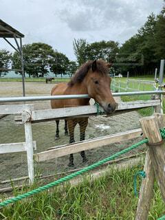 空,動物,屋外,茶色,草,馬,フェンス,立つ