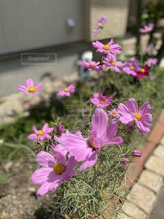 花,屋外,ピンク,草木