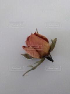 花,バラ,薔薇