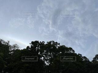 空,屋外,雲,樹木,くもり