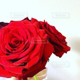 花束,バラ,プレゼント,薔薇,赤いバラ,誕生日,お祝い,母の日,サプライズ,父の日