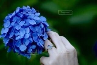 花,青,指輪,紫陽花,ブルー,婚約指輪,草木,ジュエリー,アジサイ,アクアマリン