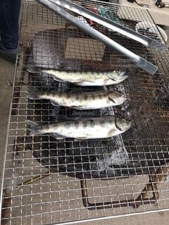 魚,バーベキュー,塩焼き,ヤマメ
