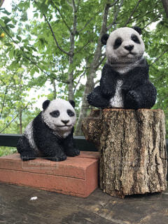 動物,黒,樹木,置物,パンダ,クマ