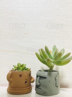 花,花瓶,植木鉢,おしゃべり,観葉植物,モアイ,多肉植物,不思議,草木,ポット,会話,ハニワ
