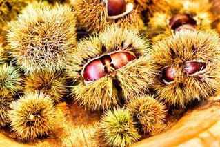 秋,栗,景色,果物,ナッツ,トゲ,収穫,くり,棘,モンブラン,味覚,ナット,甘栗,山栗