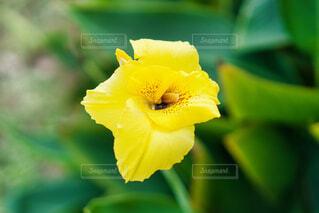 花,黄色,ガーデニング,球根,園芸,花壇,可憐,草木,ブルーム,宿根草,フローラ,ダッチアイリス