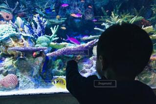 魚,サンゴ,熱帯魚,後ろ姿,水族館,水面,人物,人,容器,夏休み,驚き,ダイビング,水槽,発見,熱帯,興味,コーラル,海洋無脊椎動物,海洋生物学