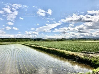 どこまでも広がる青空と田んぼと畑の写真・画像素材[4881254]