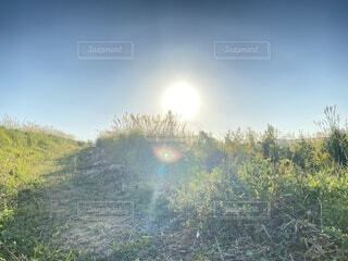 自然,空,屋外,太陽,青,草,丘,樹木,大地,高原,山腹,バック グラウンド