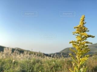 自然,風景,空,花,屋外,白,青,山,草,丘,草木,日中,バック グラウンド