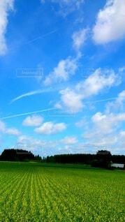 自然,風景,空,屋外,緑,雲,青い空,田舎,景色,草,樹木,新緑,田園