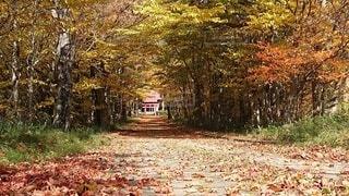 秋色の参道の写真・画像素材[4881293]