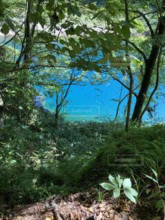自然,空,屋外,樹木,渓谷,草木,ブルーグリーン