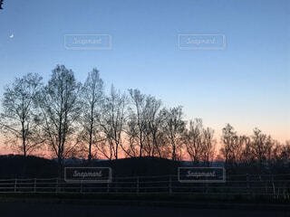 自然,風景,空,屋外,夕焼け,夕暮れ,樹木