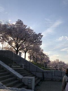 空,公園,春,桜,屋外,雲,散歩,夕方,樹木
