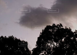 自然,風景,空,屋外,雲,樹木,月