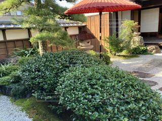 建物,花,屋外,家,樹木,植木鉢,観葉植物,低木