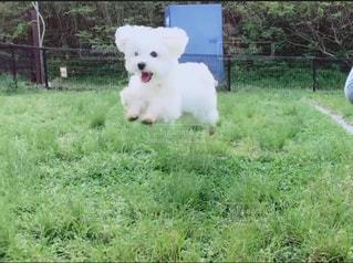 飛行犬の写真・画像素材[1205032]