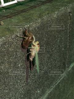 屋外,昆虫,生