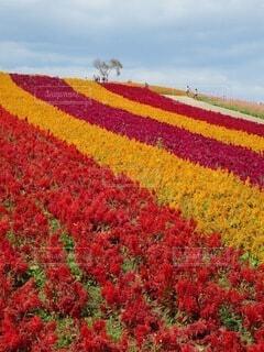花,赤,景色,草,草木