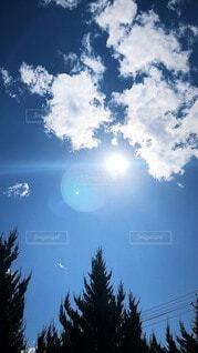 自然,空,屋外,太陽,樹木