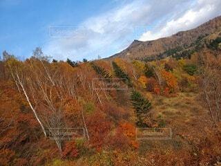 自然,風景,空,秋,紅葉,屋外,雲,山,草,樹木,草木