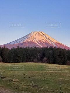 自然,風景,空,富士山,雪,屋外,ピンク,赤,雲,青空,雪山,山,景色,草,草木,赤富士