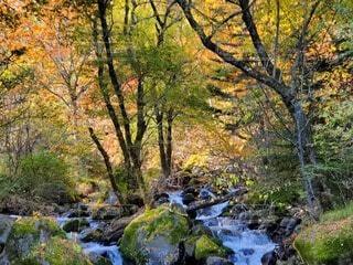 自然,風景,秋,紅葉,屋外,川,水面,葉,樹木,岩,落葉,草木,カエデ