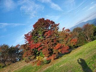 自然,風景,空,公園,秋,屋外,雲,葉,影,草,樹木,七色,草木,カエデ