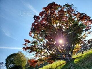 空,秋,紅葉,屋外,雲,青空,葉,樹木,七色,草木,カエデ