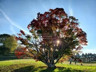 空,公園,秋,屋外,雲,葉,草,樹木,七色,草木,カエデ
