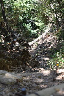 自然,森林,木,屋外,山,登山,樹木,草木,登山道