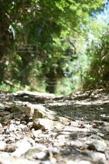 森林,木,屋外,山,登山,樹木,草木,登山道