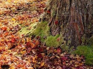 自然,風景,秋,紅葉,落ち葉,苔