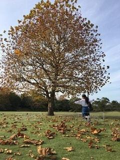 空,公園,花,秋,紅葉,屋外,景色,子供,女の子,樹木,秋晴れ,草木
