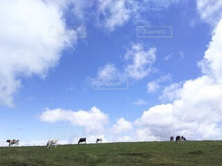 自然,風景,空,動物,屋外,緑,草原,雲,牛,牧草,牧場,景色,草,チーズ,高原,牛乳,くもり,家畜,乳牛,畜産,日中,放し飼い,開く,山腹
