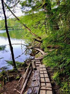 自然,屋外,湖,樹木,水と自然