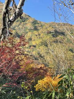 自然,風景,秋,紅葉,屋外,樹木,北アルプス