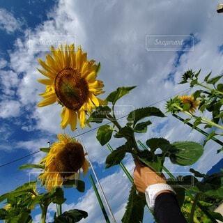 空,花,屋外,黄色,草木