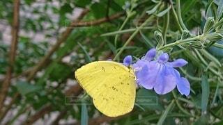 花,動物,庭,屋外,黄色,ガーデニング,青い花,樹木,ブルー,昆虫,イエロー,蝶,ちょうちょ,草木,黄色の